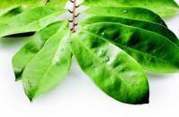 Obat Herbal Kanker Otak Yang Terbaik